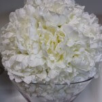 white peoney ball of flowers