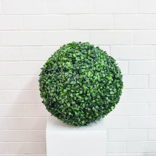 boxwood bush ball green